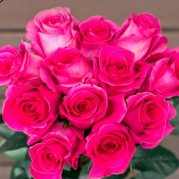 Bright Hot Pink Dozens On Sale