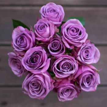 purple flowers delivery-free