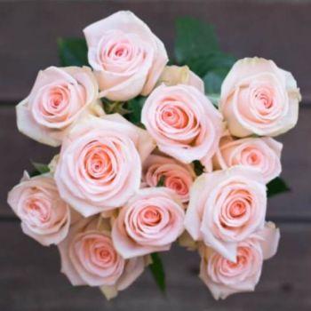 Perfect Peach Roses