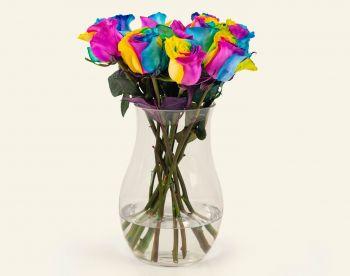 Tinted Roses Ecuador